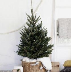 Ζωντανή δανέζικη χριστουγεννιάτικο δέντρο