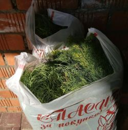 Dill 1 kg from the garden sale