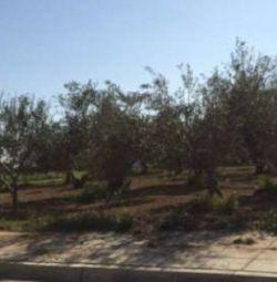 Plot în Aradippou, Larnaca
