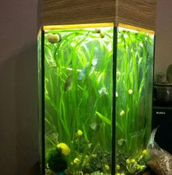 Aquarium with all the contents 35 liters