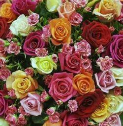 Троянди Кенія оптом