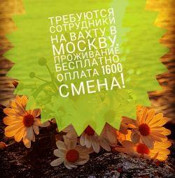 Співробітники на Вахту в Москву