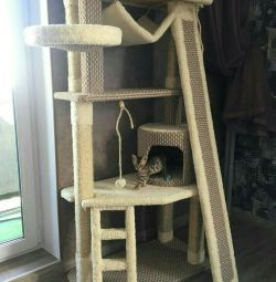 Kittens, a house for cats