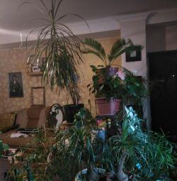 Μεγάλα φυτά εσωτερικού χώρου