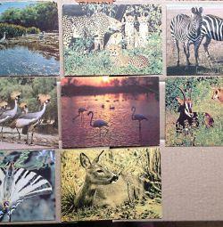 Animale păsări natura cărți poștale URSS