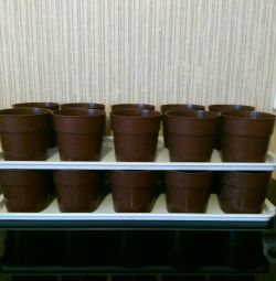 20 pots for seedlings.