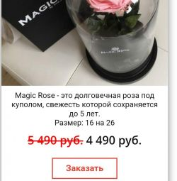 Rose in the flask Madgik Rose
