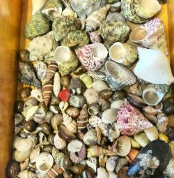 Shells for decor