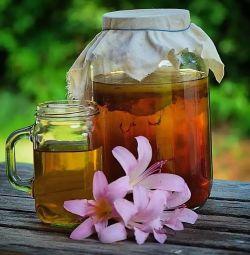 Çay Mantarı