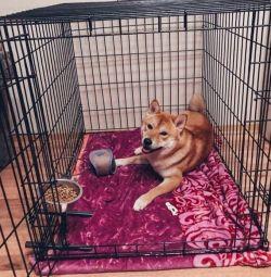Cușcă pentru câini