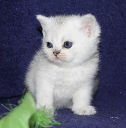 kitten stealth