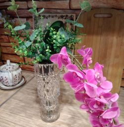 Orchid Eternally Flowering