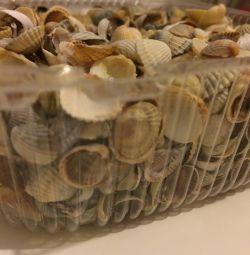 Shell small