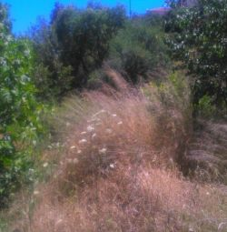 The property is about a plot of land with a surfac