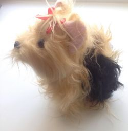 Câine mic