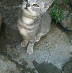 Kitten δωρεάν