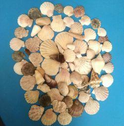 Πακέτο Seashells (70τμ.) + Δώρο