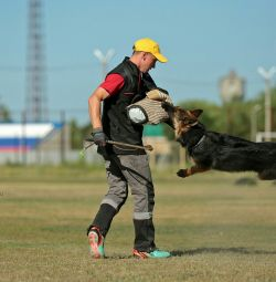 Dog training Saratov, Engels