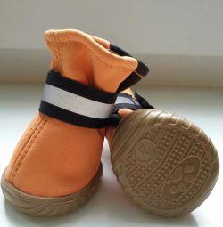 Νέα παπούτσια για μικρά σκυλιά