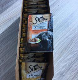 Sheba pleasure slices in cat food sauce