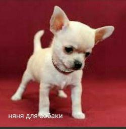 Dogcitter