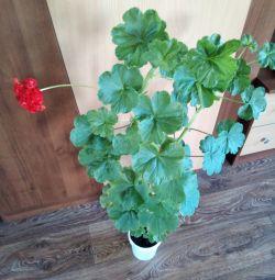 Ruh ve Sağlık için Çiçekler