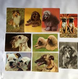 Postcards with dogs