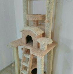 Kitten, κατασκήνωση γάτας, σύμπλεγμα γάτας