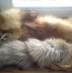 Cape-fox