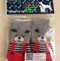 Küçük bir köpek için çorap