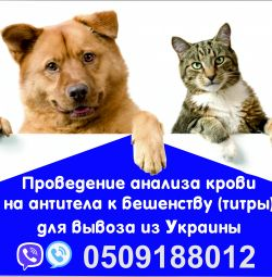 Rabies Analysis European Help for Dogs
