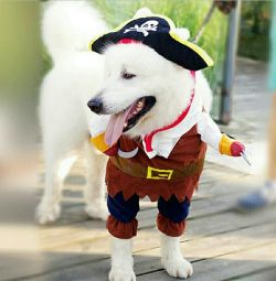 Pirate costume for pet