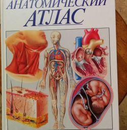 Anatomich Atlas