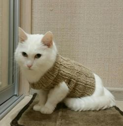 Pullover for cat or dog