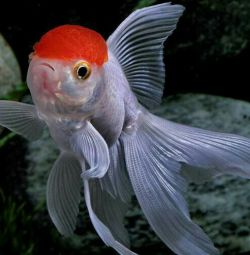 Оранди-нареченої акваріума !!!