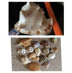 Sea shells decorative