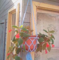Vase de plante