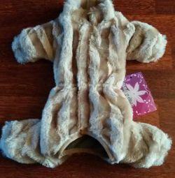 Νέο παλτό για ένα μικρό σκυλί.