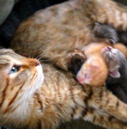 Kittens in good hands.