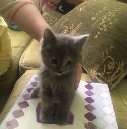 Kitten princess girl