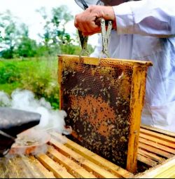 Μέλι χονδρικής