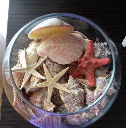 Deniz kabuklu vazo