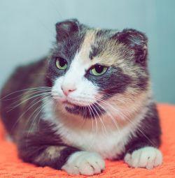 Трeхцветная кішечка Маняша