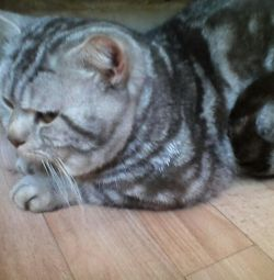 Pisica pentru tricotat