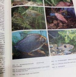 """Cartea """"Pește exotic"""""""