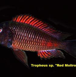 διαφορετικά ψάρια ελίτ
