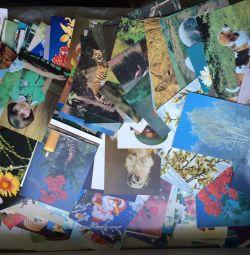 Kartlar 250 kart koleksiyonu
