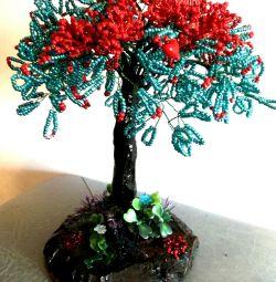 delonix δέντρο