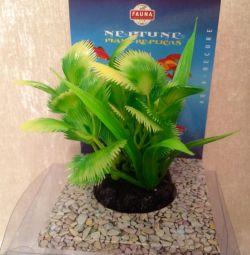 Рослина для акваріумів