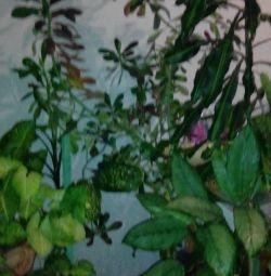 живые растения для дома и офиса